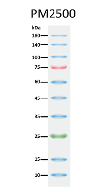 ExcelBand™ 3-color Regular Range Protein Marker, 250 μl x 2