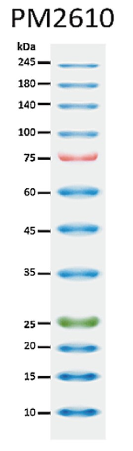 ExcelBand™ Enhanced 3-color High Range Protein Marker, 250 μl x 2