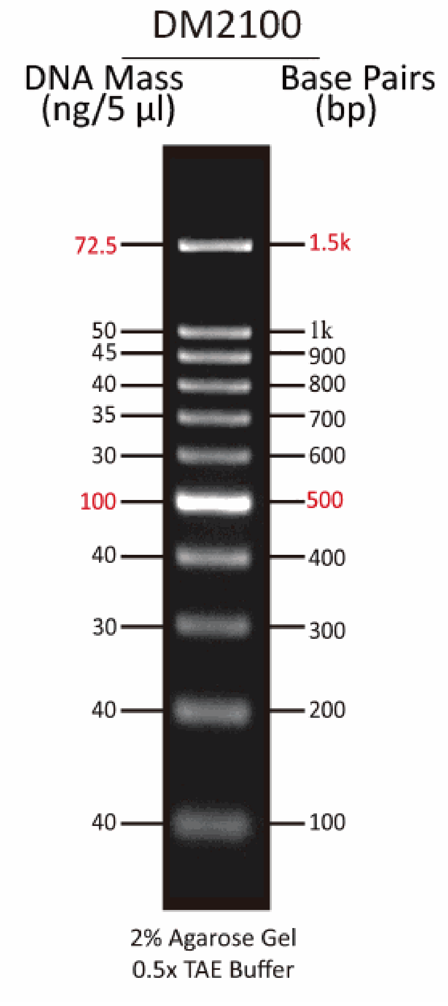 ExcelBand™ 100 bp DNA Ladder, 500 μl