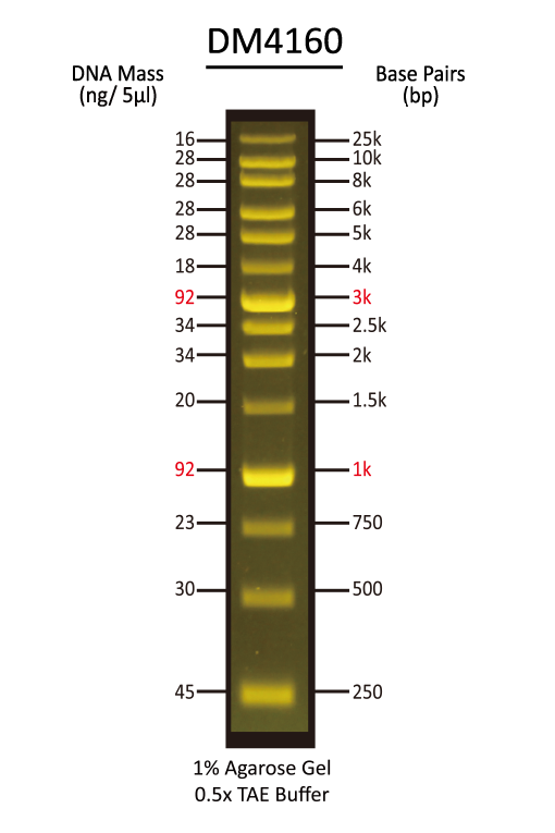 FluoroBand™ XL 25 kb Fluorescent DNA Ladder, Broad Range (up to 25 kb), 500 μl