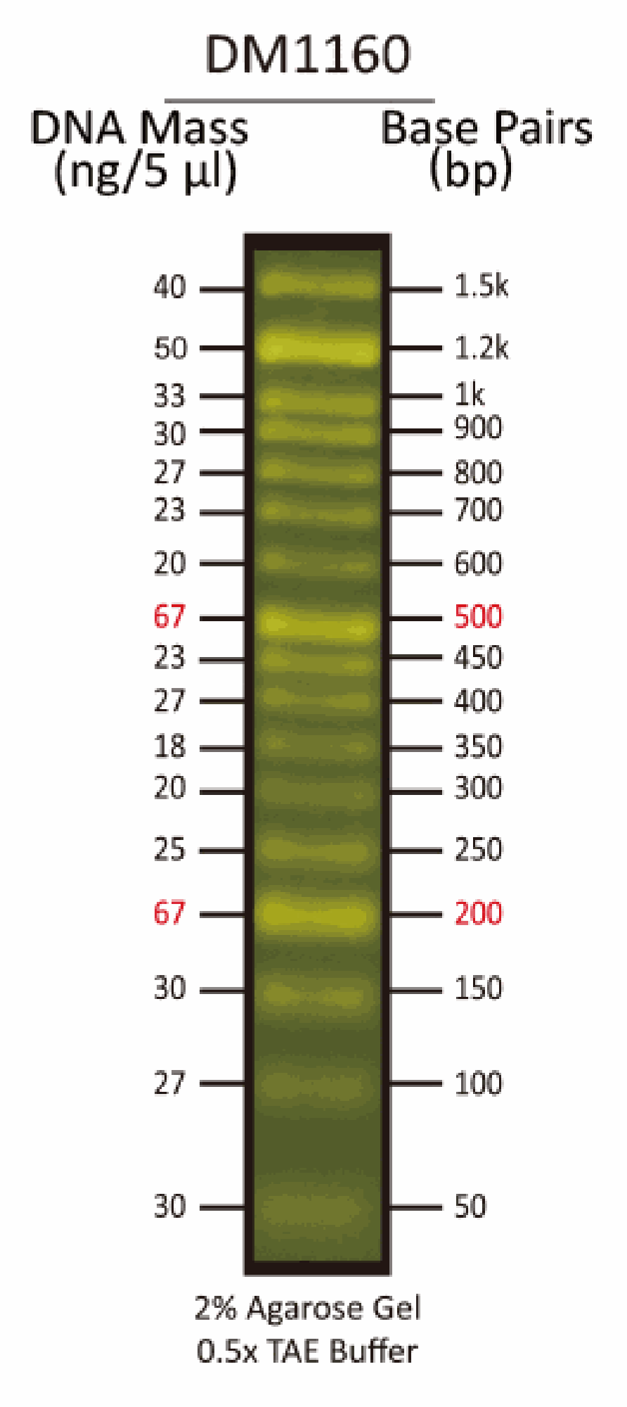 FluoroBand™ 50 bp Fluorescent DNA Ladder, 500 ul