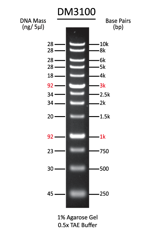 ExcelBand™ 1KB (0.25-10 kb) DNA Ladder, 500 μl
