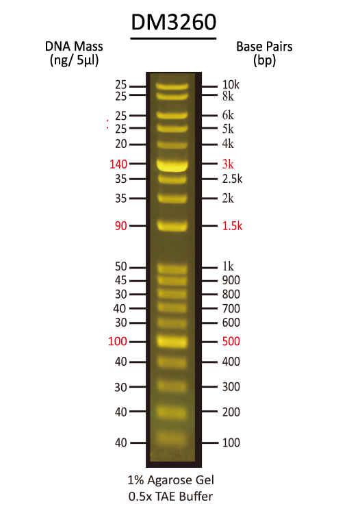 FluoroBand™ 1 KB Plus (0.1-10 kb) Fluorescent DNA Ladder, 500 μl