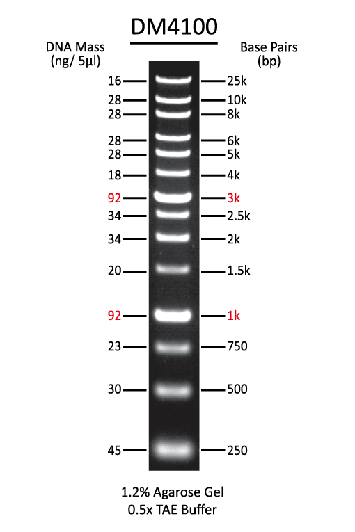 ExcelBand™ XL 25 kb DNA Ladder, Broad Range (up to 25 kb), 500 μl